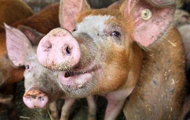 Украина увеличила экспорт животноводческой продукции в Ливан